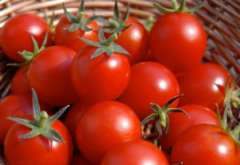 هل تعلم سبب ارتفاع سعر الطماطم في الاسواق ، اليك الجواب