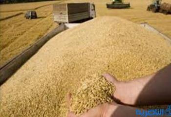 انتهاء موسم تسويق الحنطة في ذي قار  بـ 90 الف طن