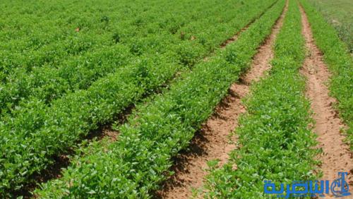 الامم المتحدة تخصص سبعة ملايين دولار لتمويل مشاريع زراعية في ذي قار