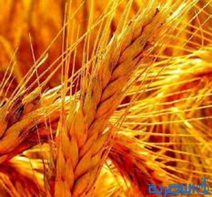 التجارة تزود ذي قار بـ 120 طنا من الحنطة الاسترالية