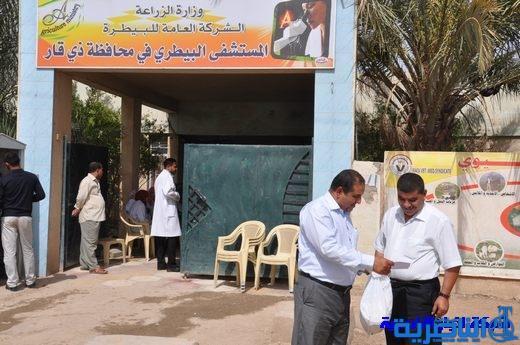 المستشفى البيطري: بلدية الناصرية لا تتعاون في ابادة الكلاب السائبة