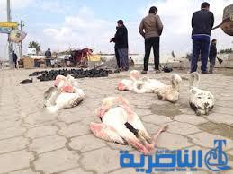 الجبايش تطالب البيئية باجراءات اكثر حزما لمنع الصيد الجائر في الاهوار