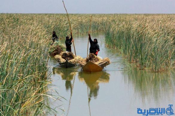 بغداد تكشف عن حزمة مشاريع جديدة لاهوار الناصرية ، ولكن !!