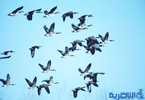 منظمة طبيعة العراق : 19 نوعا من الحيوانات النادرة مهددة بالانقراض في اهوار ذي قار