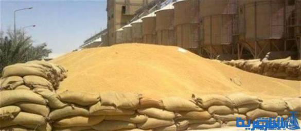 التجارة توافق على تمديد ثاني لتسويق الحنطة في ذي قار