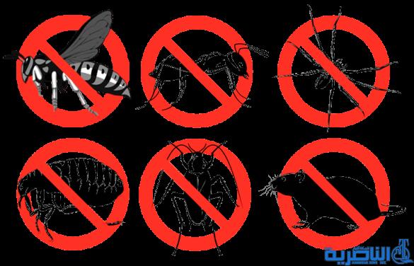 صحة ذي قار والهلال الاحمر ينفذان حملة لمكافحة الحشرات والقوارض