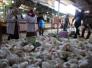 الصحة تؤكد عدم وجود أي إصابات بشرية بإنفلونزا الطيور
