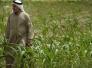 الامم المتحدة: العراق خسر 40 بالمائة من إنتاجه الزراعي