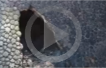 مزارع أرجنتيني يكتشف قطعة متحجرة عمرها 10 آلاف عام لحيوان المدرع (فيديو)